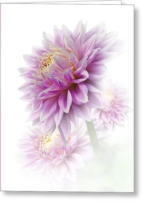 Lavender Dahlia Greeting Card