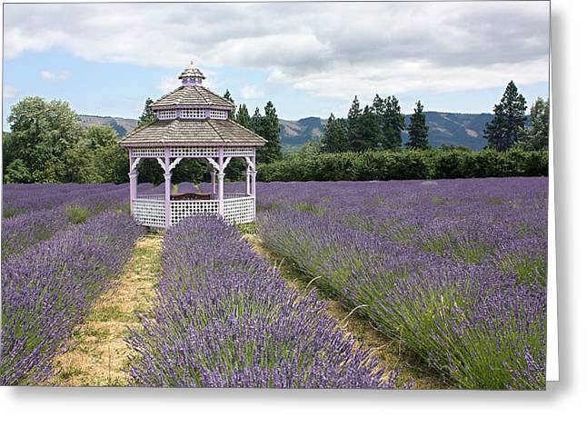 Lavender Field, Usa Greeting Card by Tony Craddock
