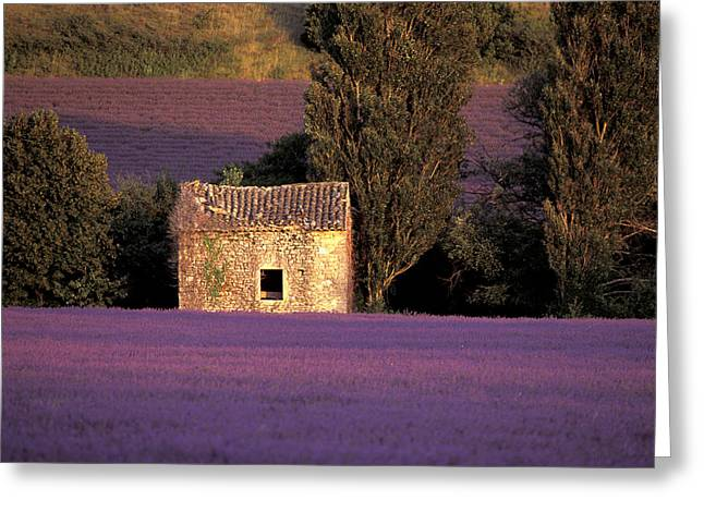 Lavender Fields Greeting Card by Christian Heeb