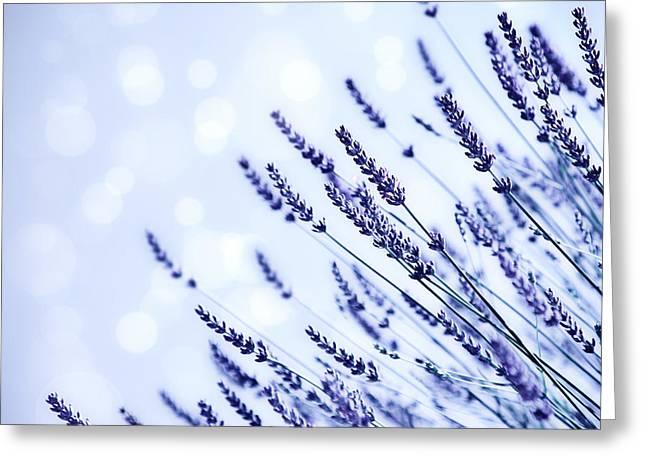 Lavender Flower Field Background Greeting Card