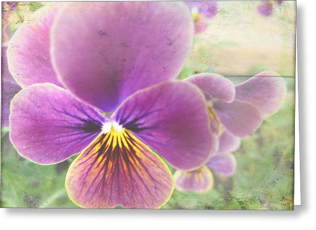 Lavender Johnny Jump Up Greeting Card by Cindy Wright