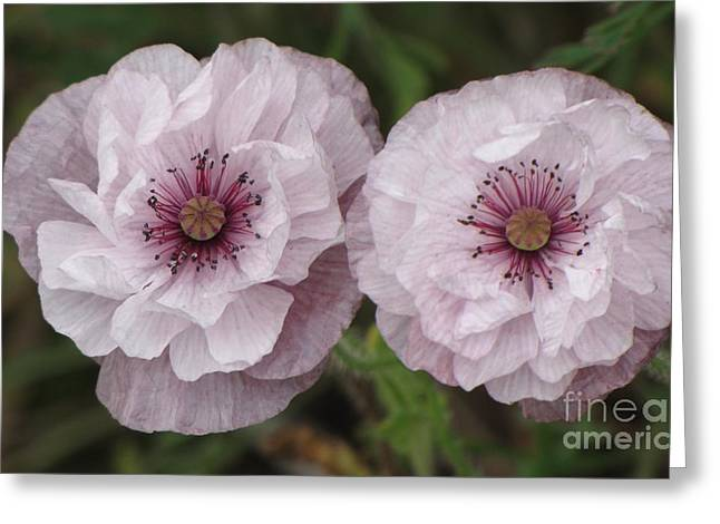Greeting Card featuring the photograph Lavender Poppies by Michele Penner