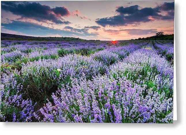 Lavender Sea Greeting Card by Evgeni Dinev