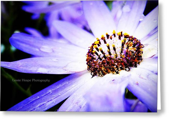 Lavender Senetti Greeting Card by Lessie Heape