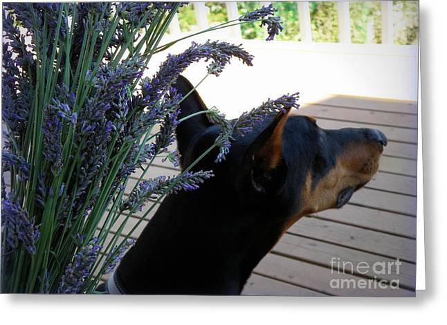 Greeting Card featuring the photograph Lavender by Tanya  Searcy