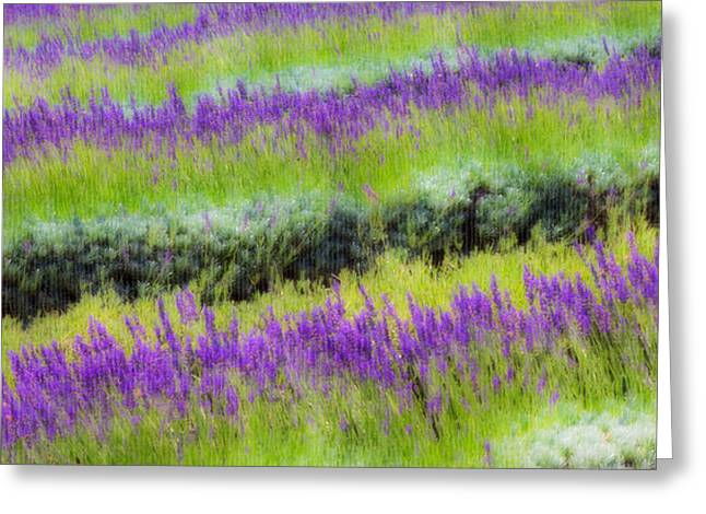 Greeting Card featuring the photograph Lavender2 by Ryan Weddle