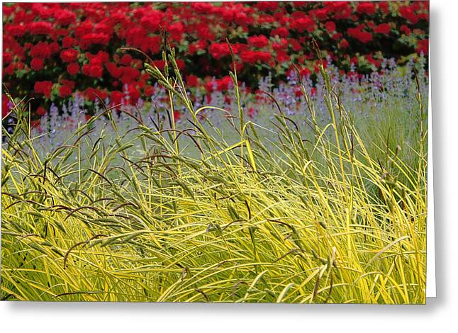 Layered Greeting Card by Lynn Wohlers