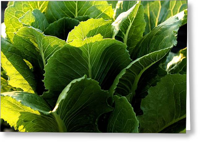 Layers Of Romaine Greeting Card by Angela Rath