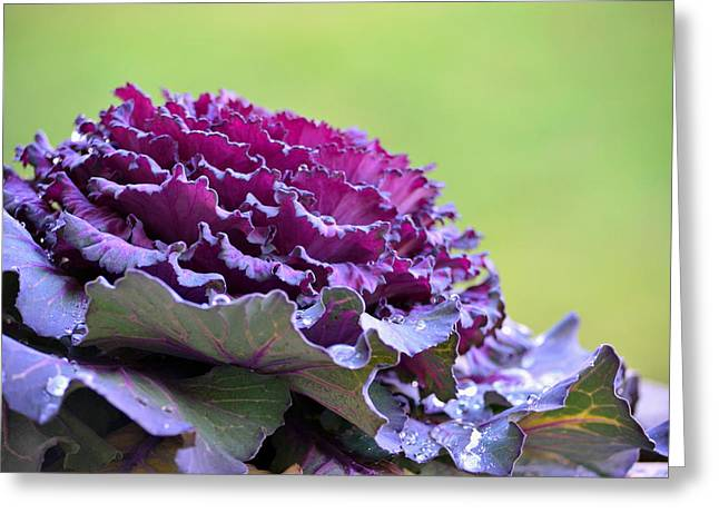 Layers Of Wet Beauty Greeting Card by Sandi OReilly