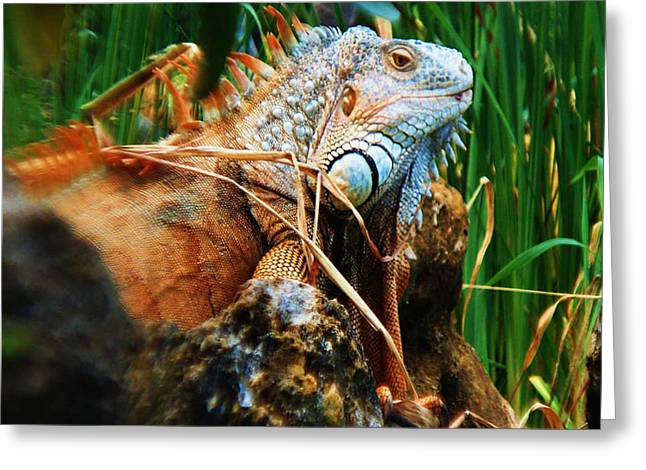 Greeting Card featuring the photograph Lazy Lizard Lounging by Joy Braverman