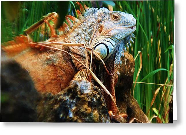 Lazy Lizard Lounging Greeting Card by Joy Braverman