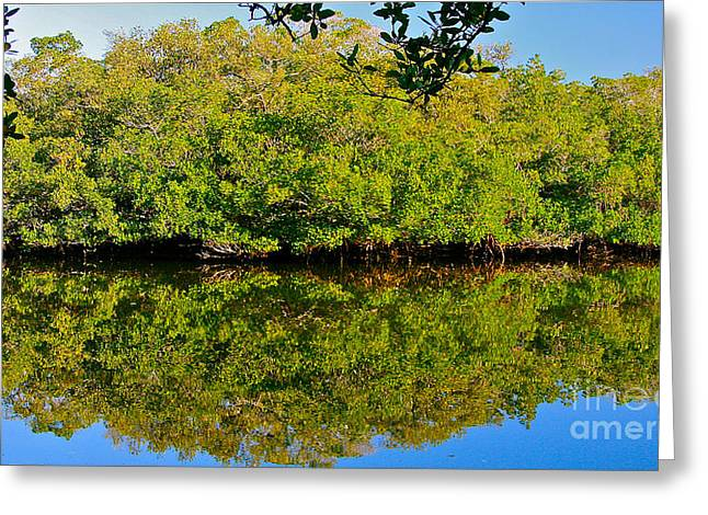 Lazy Reflections Greeting Card by Joan McArthur