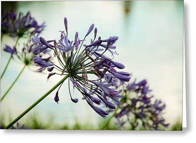 Lead Flower Greeting Card by Ezequiel Rodriguez Baudo