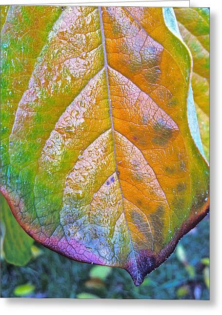 Leaf Greeting Card by Bill Owen
