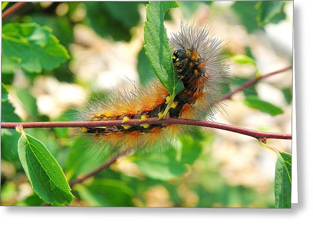 Leaf Eating Caterpillar Greeting Card