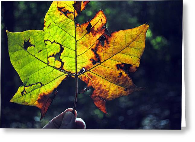 Leaf In Light Greeting Card