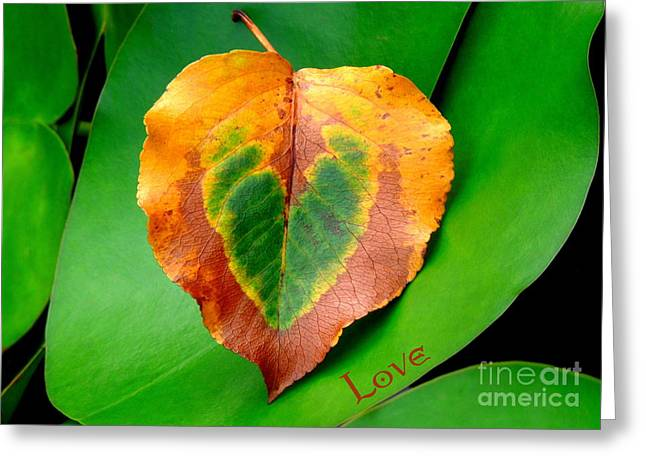 Leaf Leaf Heart Love Greeting Card