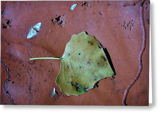 Greeting Card featuring the photograph Leaf Libretto by Britt Runyon