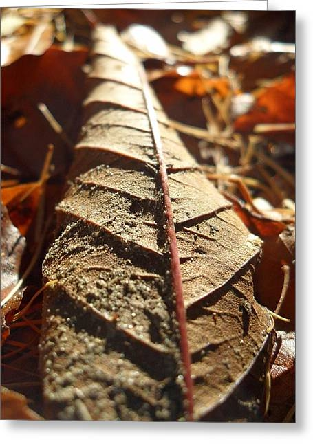 Leaf Litter Greeting Card