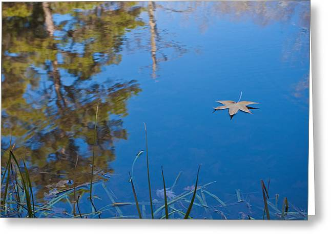 Leaf On Pond Greeting Card