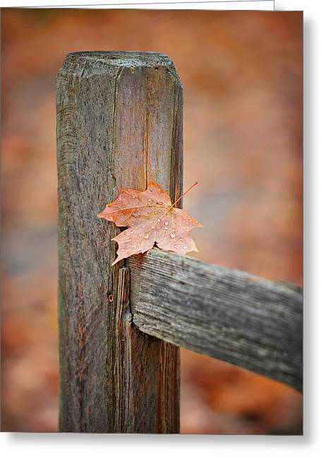 Leaf On The Fence Greeting Card by Brian Mollenkopf