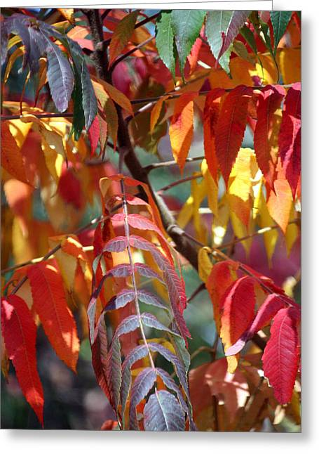 Greeting Card featuring the photograph Leaf Peeping by Penny Hunt