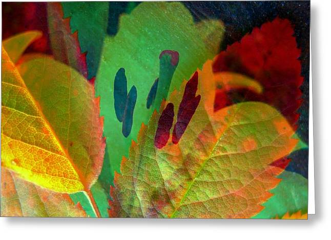 Leaf Reflections Greeting Card by Shirley Sirois