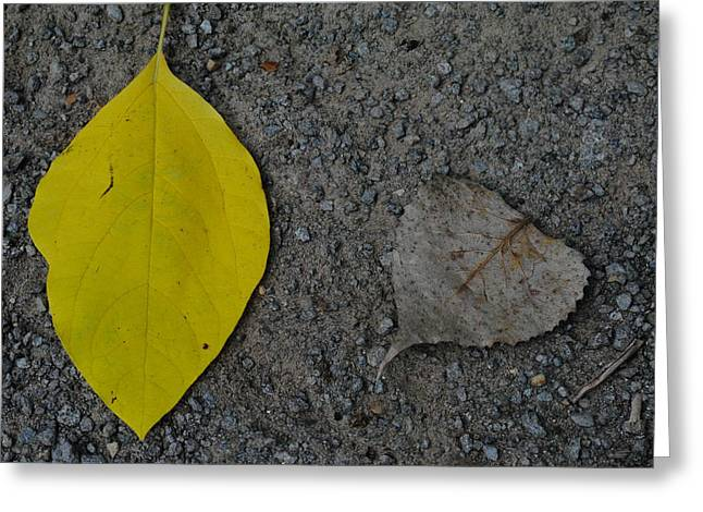 Leaf Yellow And Grey Greeting Card