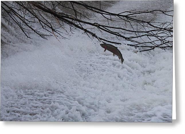 Leap Of Faith Greeting Card by Paul Hurtubise