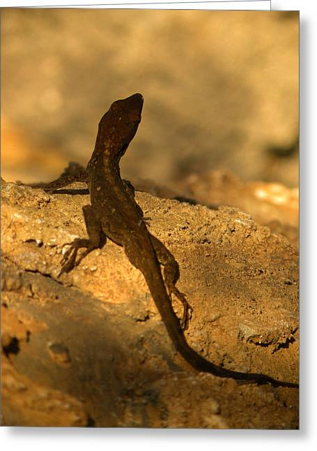 Leapin' Lizards Greeting Card