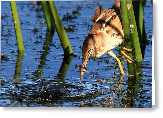 Least Bittern With A Molly Greeting Card