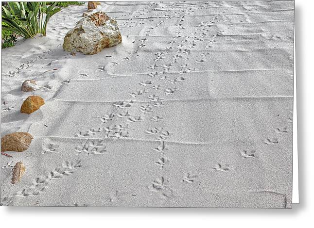 Leave Nothing But Your Footprints Greeting Card