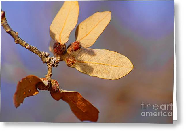 Leaves And Berries Greeting Card by Jeremy Linot