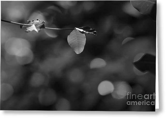 Leaves And Light Greeting Card by Dariusz Gudowicz