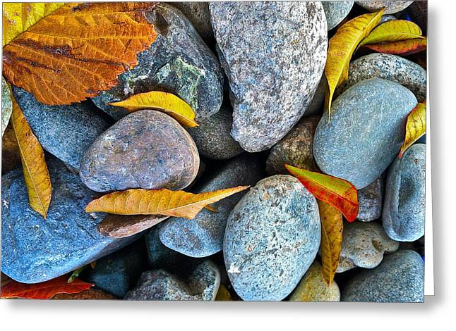 Leaves And Rocks Greeting Card by Bill Owen