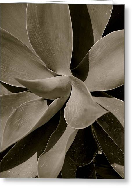 Leaves II - Mono Greeting Card by Dickon Thompson