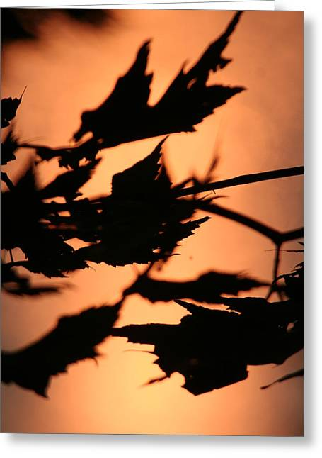 Leaves In Sunset Greeting Card by Carolyn Reinhart