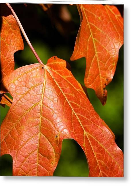 Leaves Of Orange Greeting Card by Beth Akerman