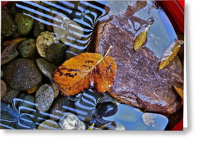Leaves Rocks Shadows Greeting Card by Bill Owen