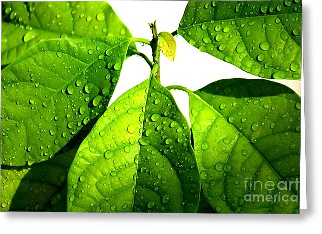 Leaves With Raindrops Greeting Card by Theresa Willingham