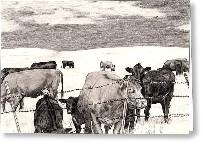 Leery Cows Greeting Card by Jason Thrun