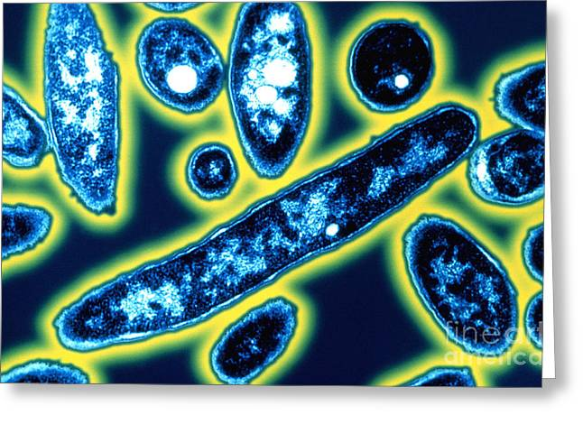 Legionella Bacteria Greeting Card by Science Source