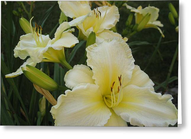 Greeting Card featuring the photograph Lemon Daylilies by Bonnie Goedecke