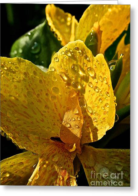Lemon Drop Canna Lily Greeting Card by Susan Herber