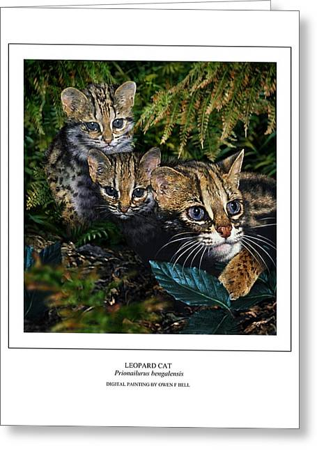 Leopard Cat Prionailurus Bengalensis Greeting Card by Owen Bell