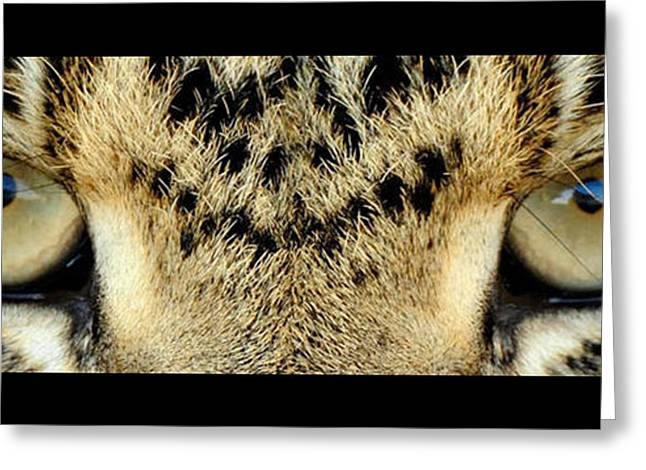 Leopard Eyes Greeting Card by Sumit Mehndiratta