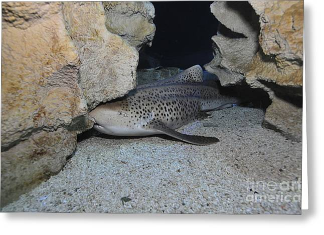 Leopard Shark, Blue Zoo Aquarium Greeting Card by Mathieu Meur