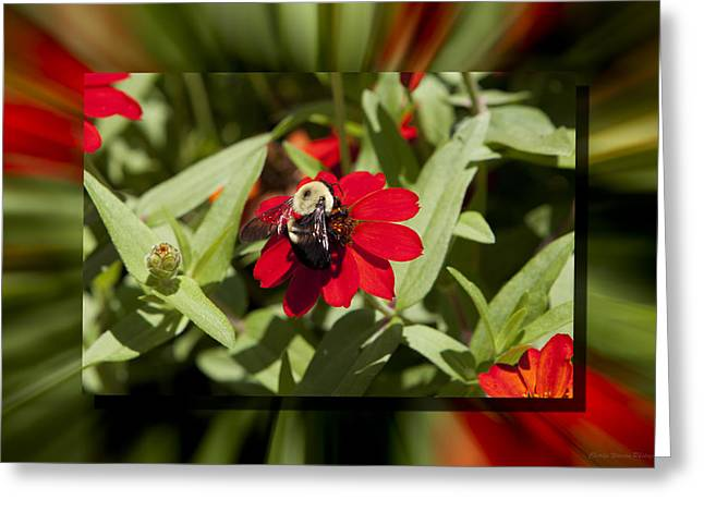 Let It Bee Greeting Card by Charles Warren