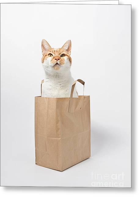 Letting The Cat Out Of The Bag Greeting Card by Catherine MacBride