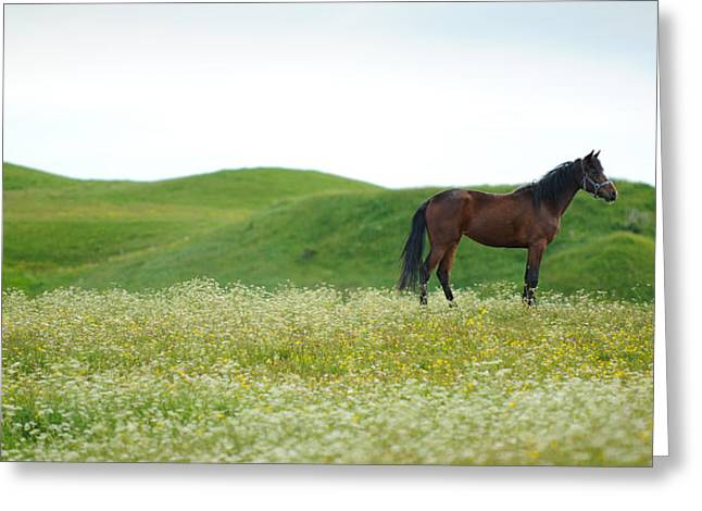 Liberty Greeting Card by PNDT Photo